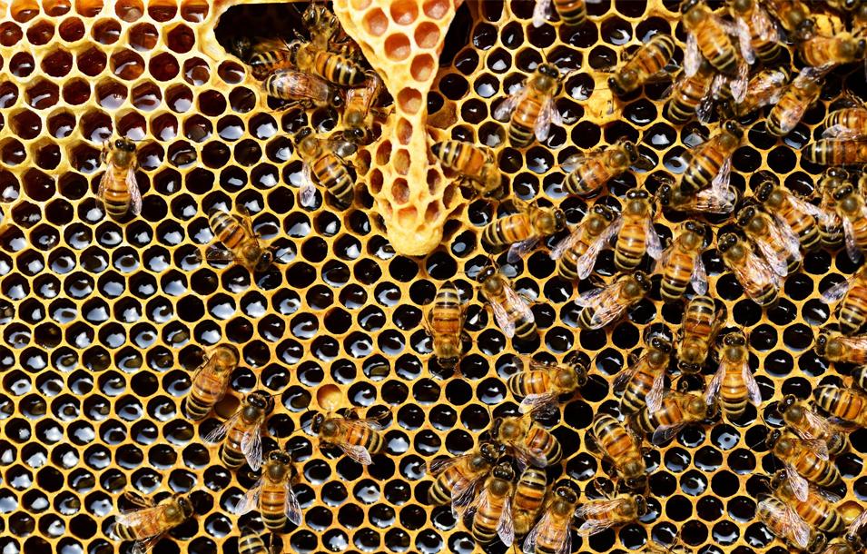 Imagen de quiénes somos abejas