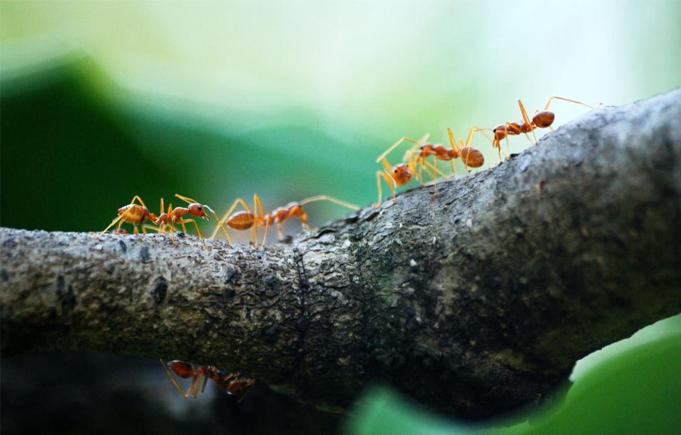 Imagen de quiénes somos hormigas